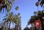 Image of Palm tree lined street in neighborhood Los Angeles California USA, 1976, second 26 stock footage video 65675033263