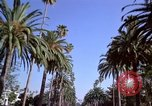 Image of Palm tree lined street in neighborhood Los Angeles California USA, 1976, second 27 stock footage video 65675033263