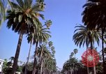 Image of Palm tree lined street in neighborhood Los Angeles California USA, 1976, second 28 stock footage video 65675033263