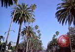 Image of Palm tree lined street in neighborhood Los Angeles California USA, 1976, second 29 stock footage video 65675033263