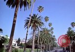 Image of Palm tree lined street in neighborhood Los Angeles California USA, 1976, second 30 stock footage video 65675033263