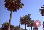 Image of Palm tree lined street in neighborhood Los Angeles California USA, 1976, second 50 stock footage video 65675033263