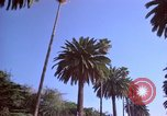 Image of Palm tree lined street in neighborhood Los Angeles California USA, 1976, second 51 stock footage video 65675033263