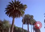 Image of Palm tree lined street in neighborhood Los Angeles California USA, 1976, second 52 stock footage video 65675033263