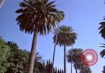 Image of Palm tree lined street in neighborhood Los Angeles California USA, 1976, second 54 stock footage video 65675033263