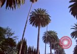 Image of Palm tree lined street in neighborhood Los Angeles California USA, 1976, second 55 stock footage video 65675033263