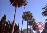 Image of Palm tree lined street in neighborhood Los Angeles California USA, 1976, second 56 stock footage video 65675033263