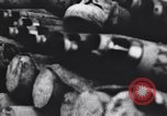 Image of Allied Forces Tunisia North Africa, 1943, second 55 stock footage video 65675033479