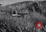 Image of Allied forces advancing toward Tunis Tunis Tunisia, 1942, second 39 stock footage video 65675033508