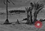 Image of Allied soldiers celebrate Christmas in North Africa Egypt, 1942, second 53 stock footage video 65675033510