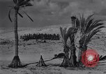 Image of Allied soldiers celebrate Christmas in North Africa Egypt, 1942, second 54 stock footage video 65675033510