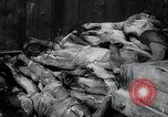 Image of German atrocities Germany, 1945, second 17 stock footage video 65675033529