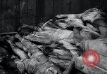 Image of German atrocities Germany, 1945, second 20 stock footage video 65675033529