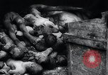 Image of German atrocities Germany, 1945, second 44 stock footage video 65675033529