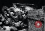 Image of German atrocities Germany, 1945, second 47 stock footage video 65675033529
