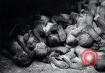 Image of German atrocities Germany, 1945, second 49 stock footage video 65675033529