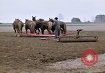 Image of Farmer with horses and mules plows field New York United States USA, 1970, second 9 stock footage video 65675040536