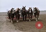 Image of Farmer with horses and mules plows field New York United States USA, 1970, second 38 stock footage video 65675040536