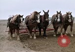 Image of Farmer with horses and mules plows field New York United States USA, 1970, second 40 stock footage video 65675040536