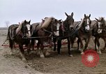 Image of Farmer with horses and mules plows field New York United States USA, 1970, second 41 stock footage video 65675040536