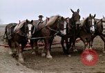 Image of Farmer with horses and mules plows field New York United States USA, 1970, second 42 stock footage video 65675040536