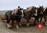 Image of Farmer with horses and mules plows field New York United States USA, 1970, second 43 stock footage video 65675040536