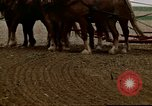Image of Farmer with horses and mules plows field New York United States USA, 1970, second 50 stock footage video 65675040536