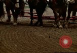 Image of Farmer with horses and mules plows field New York United States USA, 1970, second 52 stock footage video 65675040536