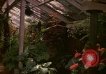 Image of greenhouse Kingston Jamaica, 1972, second 41 stock footage video 65675040555