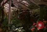 Image of greenhouse Kingston Jamaica, 1972, second 42 stock footage video 65675040555
