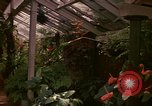 Image of greenhouse Kingston Jamaica, 1972, second 44 stock footage video 65675040555