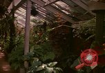 Image of greenhouse Kingston Jamaica, 1972, second 45 stock footage video 65675040555