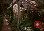 Image of greenhouse Kingston Jamaica, 1972, second 46 stock footage video 65675040555