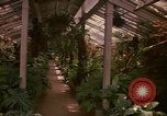 Image of greenhouse Kingston Jamaica, 1972, second 47 stock footage video 65675040555