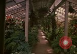 Image of greenhouse Kingston Jamaica, 1972, second 48 stock footage video 65675040555