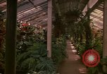 Image of greenhouse Kingston Jamaica, 1972, second 49 stock footage video 65675040555