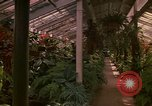 Image of greenhouse Kingston Jamaica, 1972, second 50 stock footage video 65675040555