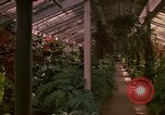 Image of greenhouse Kingston Jamaica, 1972, second 51 stock footage video 65675040555