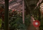 Image of greenhouse Kingston Jamaica, 1972, second 52 stock footage video 65675040555