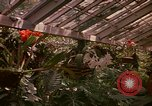 Image of greenhouse Kingston Jamaica, 1972, second 53 stock footage video 65675040555