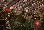 Image of greenhouse Kingston Jamaica, 1972, second 54 stock footage video 65675040555