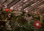 Image of greenhouse Kingston Jamaica, 1972, second 55 stock footage video 65675040555