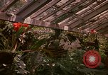 Image of greenhouse Kingston Jamaica, 1972, second 60 stock footage video 65675040555