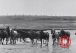 Image of Horse buyers Chincoteague Island Virginia USA, 1931, second 34 stock footage video 65675040715