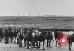 Image of Horse buyers Chincoteague Island Virginia USA, 1931, second 36 stock footage video 65675040715