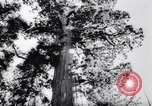 Image of Yosemite National Park in World War 2 Yosemite National Park California USA, 1943, second 37 stock footage video 65675040770