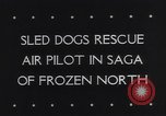 Image of Dog sled team rescues pilot United States USA, 1944, second 2 stock footage video 65675040790