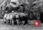 Image of Pacific Islanders in dugout canoes Pacific Theater, 1942, second 52 stock footage video 65675040839