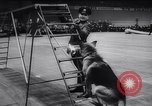 Image of Police Festival Germany, 1957, second 49 stock footage video 65675040880