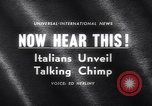 Image of chimpanzees Rome Italy, 1962, second 2 stock footage video 65675040906